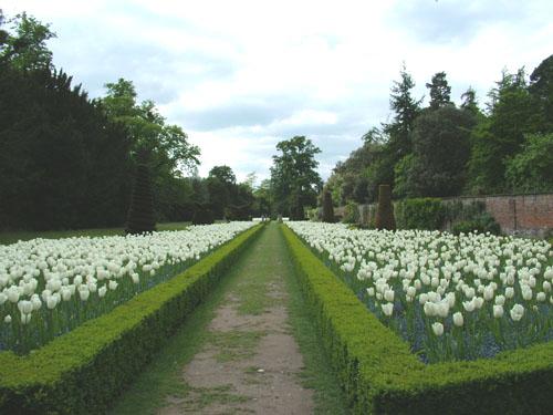 cliveden-tulip-garden-anewgarden.jpg