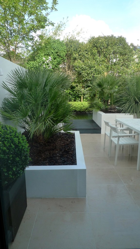 Raised white render plastered beds Moleanos Limestone paving tiles with decking stain matt black Architectural planting with buxus topiary and floating black bench Garden Design and Build Brixton London (1)