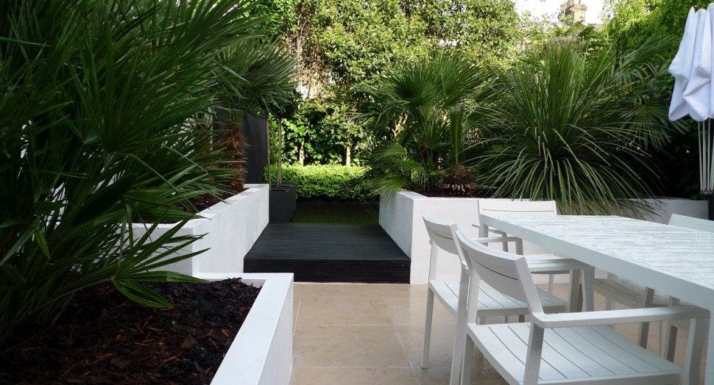 Raised white render plastered beds Moleanos Limestone paving tiles with decking stain matt black Architectural planting with buxus topiary and floating black bench Garden Design and Build Brixton London (10)