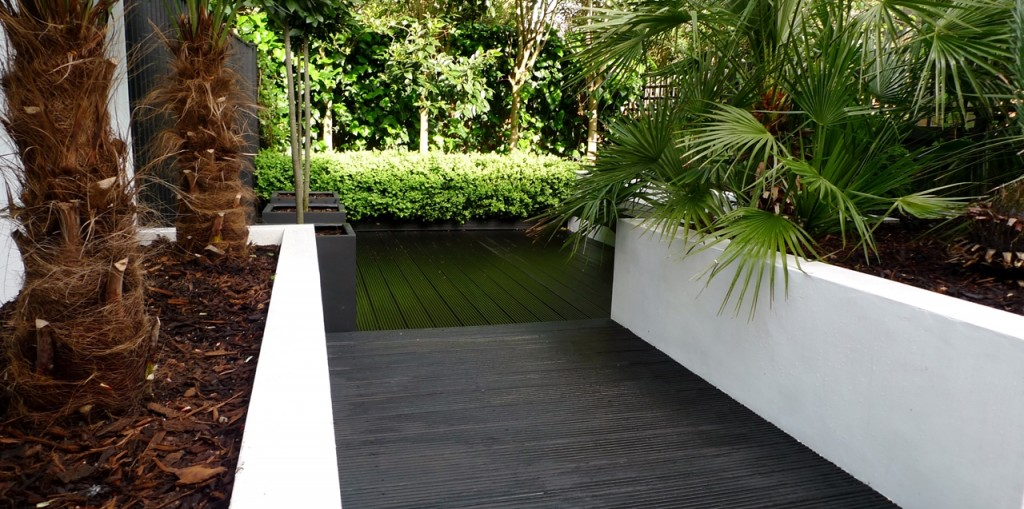 Raised white render plastered beds Moleanos Limestone paving tiles with decking stain matt black Architectural planting with buxus topiary and floating black bench Garden Design and Build Brixton London (11)