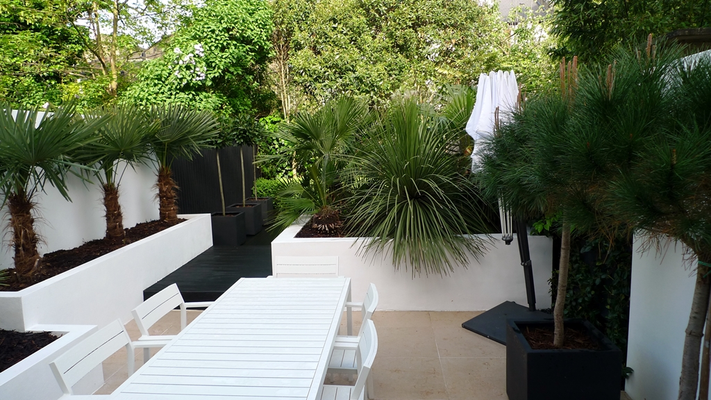 Raised white render plastered beds Moleanos Limestone paving tiles with decking stain matt black Architectural planting with buxus topiary and floating black bench Garden Design and Build Brixton London (13)
