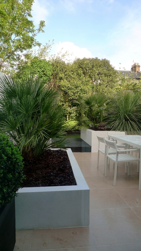 Raised white render plastered beds Moleanos Limestone paving tiles with decking stain matt black Architectural planting with buxus topiary and floating black bench Garden Design and Build Brixton London (2)