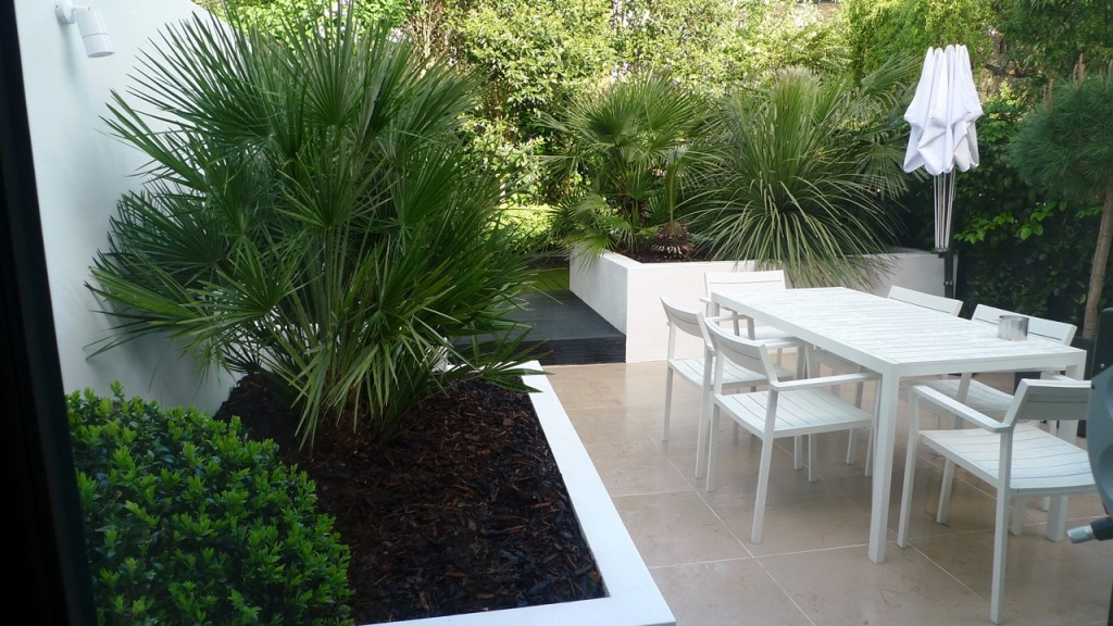 Raised white render plastered beds Moleanos Limestone paving tiles with decking stain matt black Architectural planting with buxus topiary and floating black bench Garden Design and Build Brixton London (3)