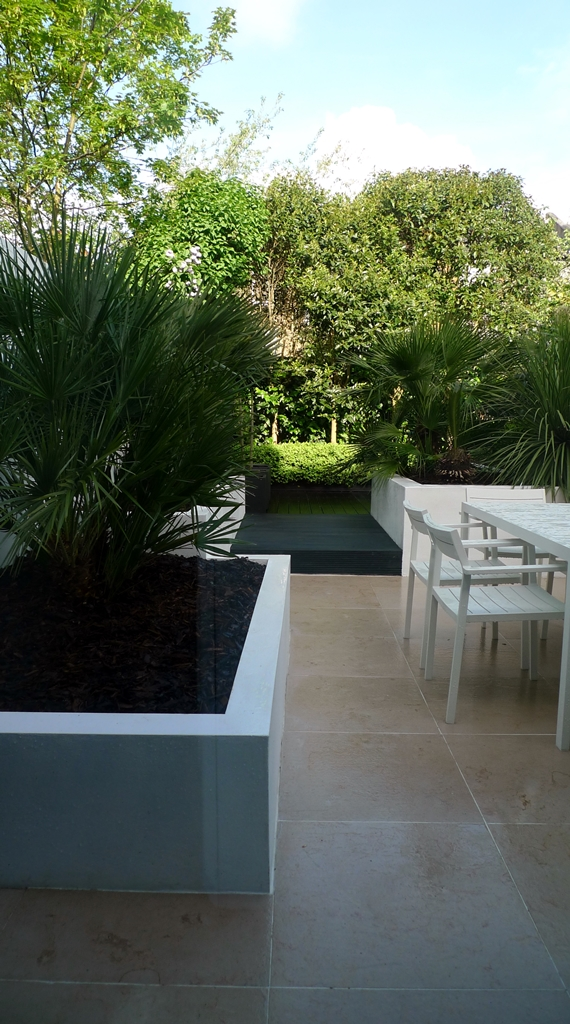 Raised white render plastered beds Moleanos Limestone paving tiles with decking stain matt black Architectural planting with buxus topiary and floating black bench Garden Design and Build Brixton London (4)