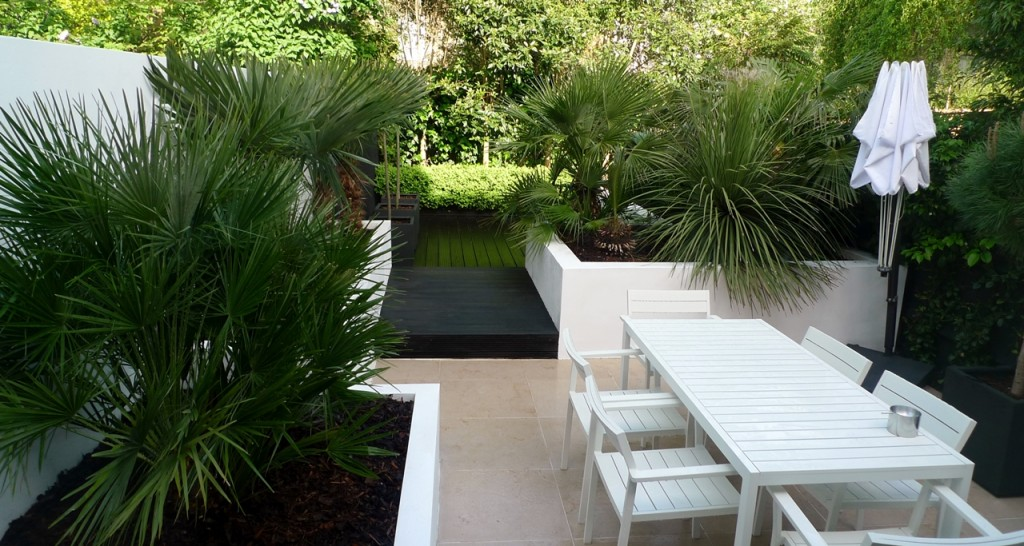 Raised white render plastered beds Moleanos Limestone paving tiles with decking stain matt black Architectural planting with buxus topiary and floating black bench Garden Design and Build Brixton London (5)