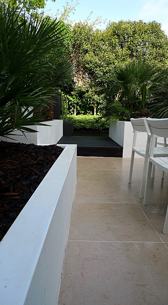 Raised white render plastered beds Moleanos Limestone paving tiles with decking stain matt black Architectural planting with buxus topiary and floating black bench Garden Design and Build Brixton London (9)
