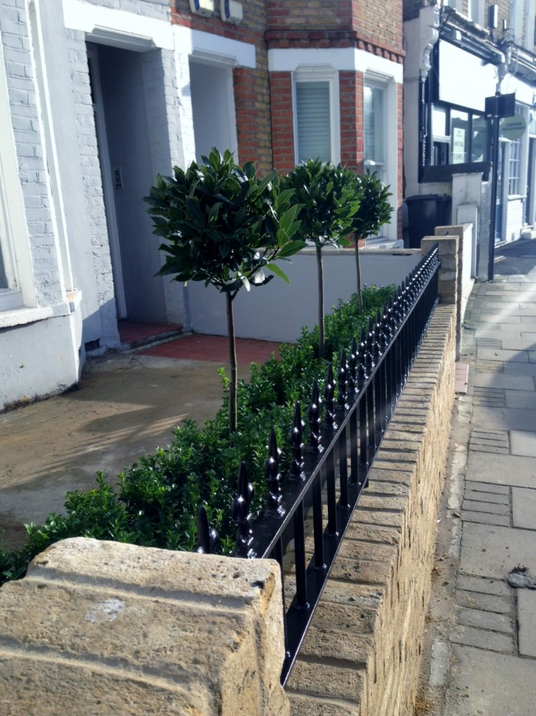 Yellow brick garden wall metal rail and gate bay and buxus topiary Clapham Battersea Balham London (14)