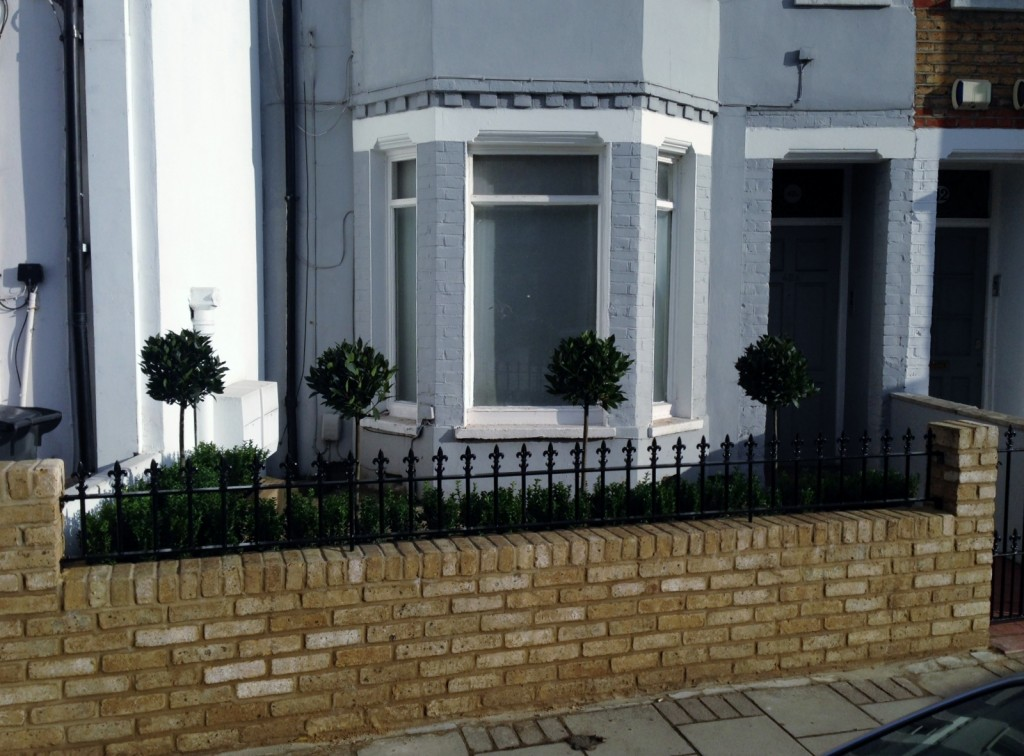 Yellow brick garden wall metal rail and gate bay and buxus topiary Clapham Battersea Balham London (4)