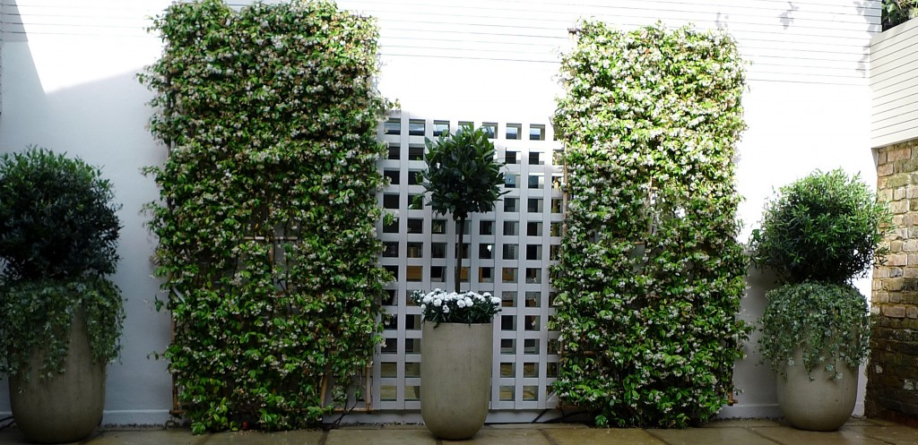 Architectural  low maintenance topiary London   planting