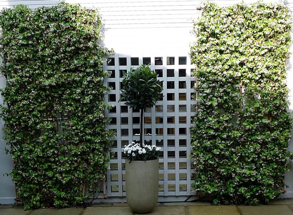 Brick garden wall Balham Clapham  Wandsworth planting topiary formal London