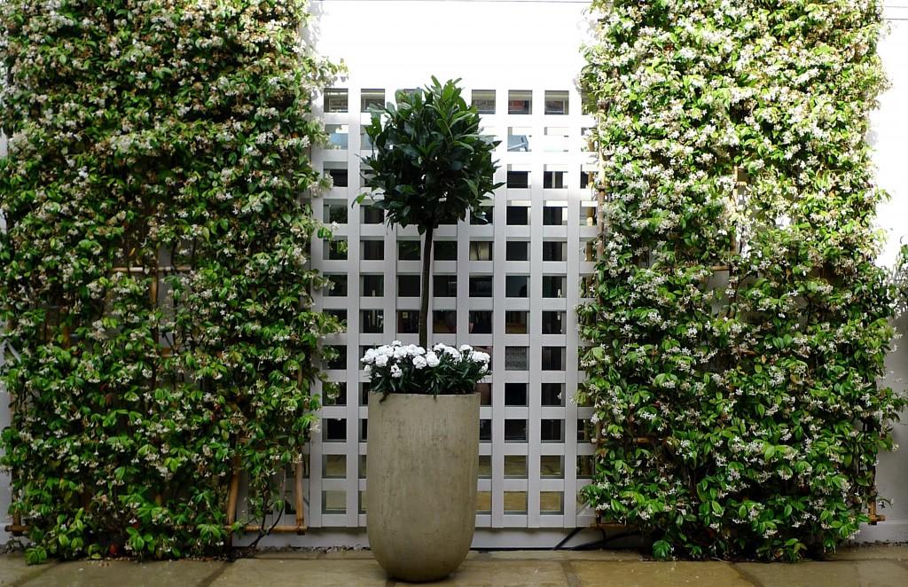 Garden London trellis plants travertine paving  Fulham small garden design topiary