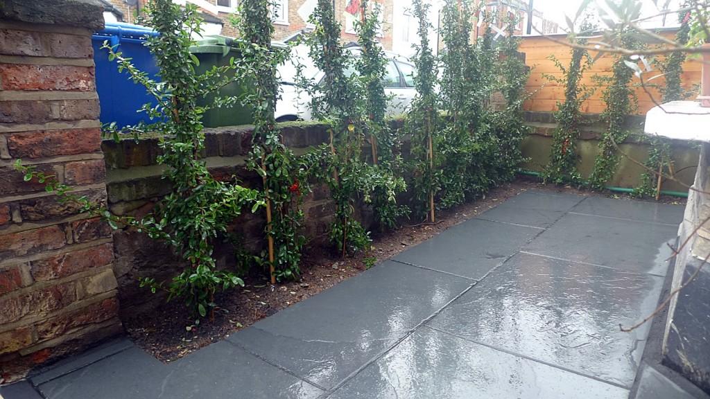 Path planting London sandstone Chelsea Fulham modern garden