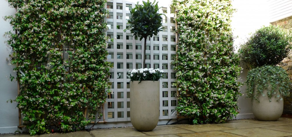 Planting formal topiary London Fulham Chelsea  low maintenance Dulwich