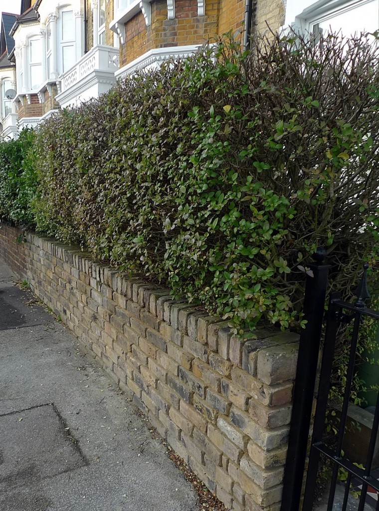 Brick garden wall planting low maintenance London Battersea Dulwich Peckham Balham Clapham