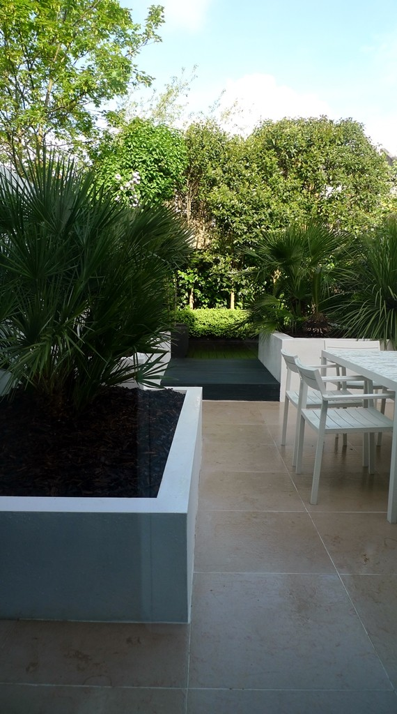 Raised beds planting buxux topiary limestone paving decking privacy screen London Fulham Chelsea Battersea
