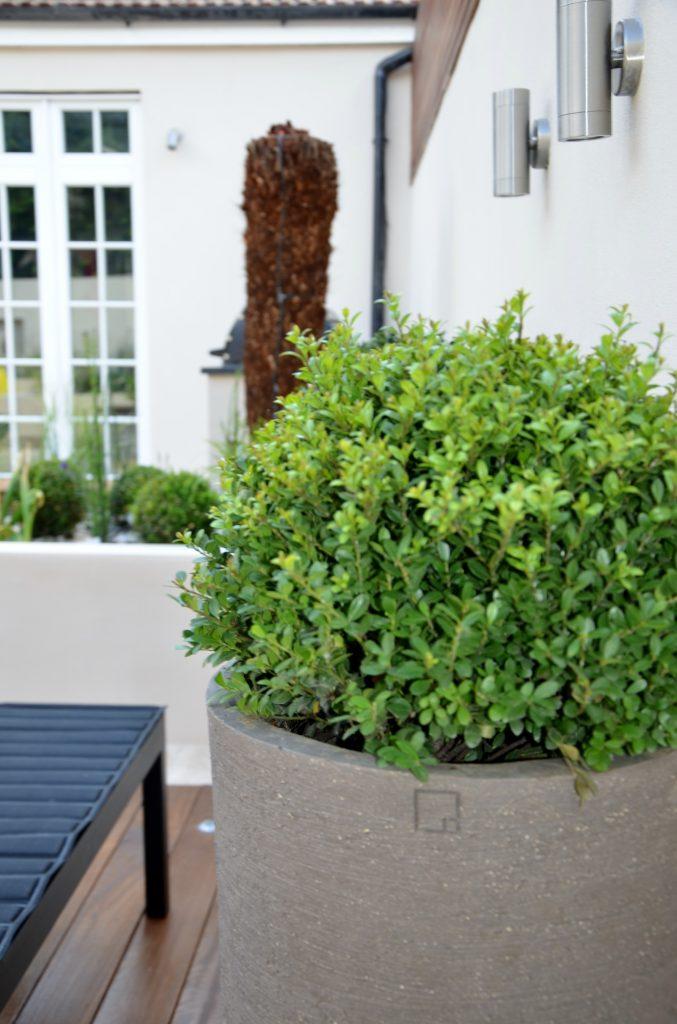 Garden Design London Cat Howard Anewgarden #balham